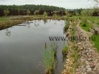Пруд и озеро